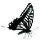 logo de l'ANADAVI